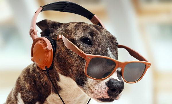 Será que os animais gostam de música?