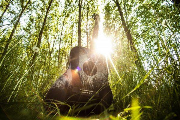 Estudo indica que plantas reagem a música clássica
