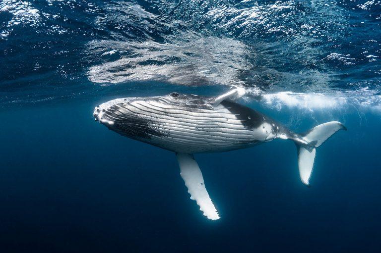 Poluição sonora dos humanos prejudica animais marinhos e terrestres