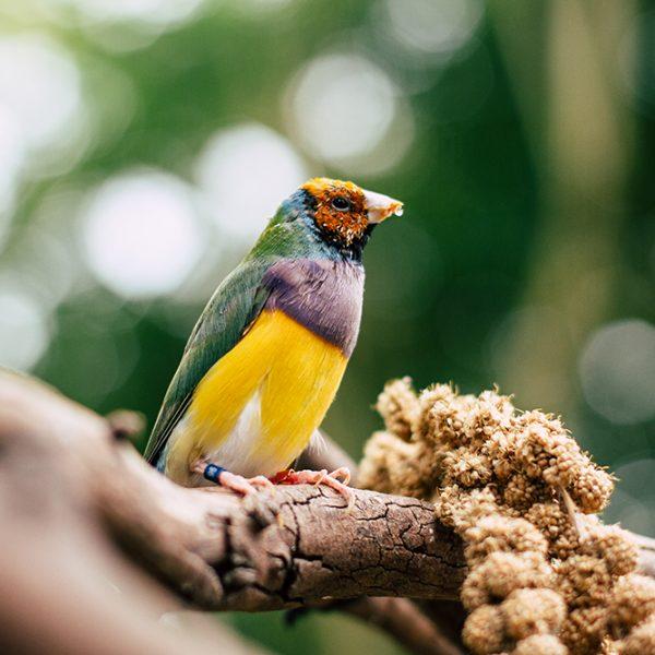 Poluição sonora prejudica até a reprodução de aves
